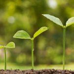 Экология земли: как почву очищают от отходов