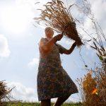 Пшеница для своих: Россия остановила экспорт зерна