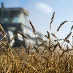 Может не хватить: России стоит подумать о зерновых резервах
