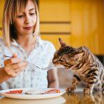 Арендуем жилье с домашними животными: какие могут быть проблемы?