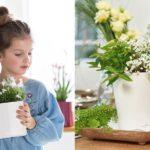 Что такое кашпо для цветов: фото, описание, стоит ли покупать